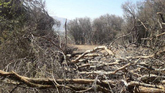 desmonte ilegal en La Caldera