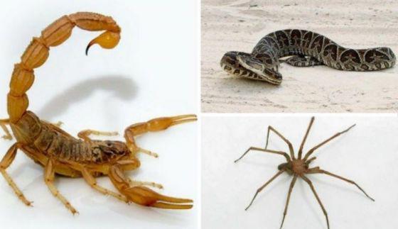 Advierten sobre la aparición de alacranes, arañas y serpientes por el calor