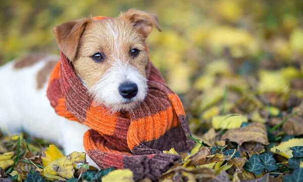 Más de 30 perros peregrinos esperan a sus dueños