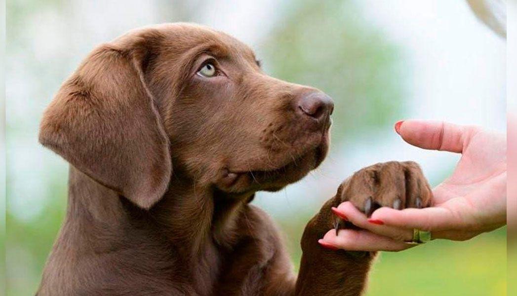 Se descubrió qué quiere decir tu perro al ponerte la pata encima