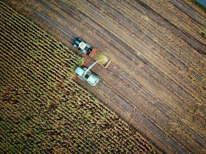 cultivos soja transgenicos (1)