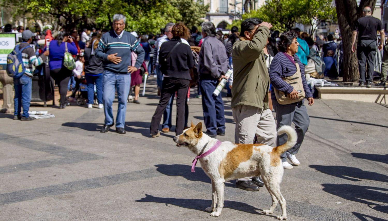 perros peregrinos