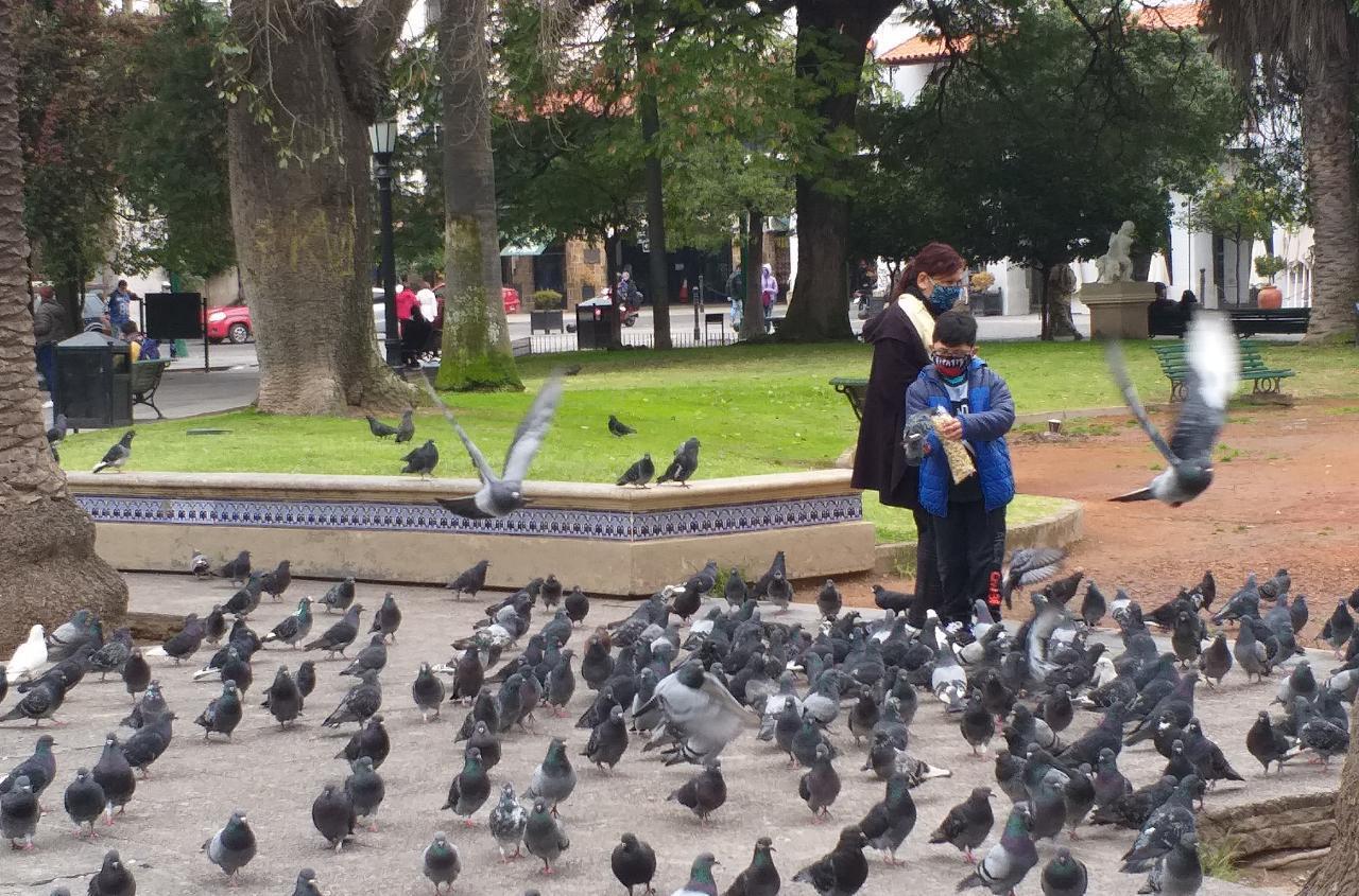 centro ciudad tiempo clima palomas plaza