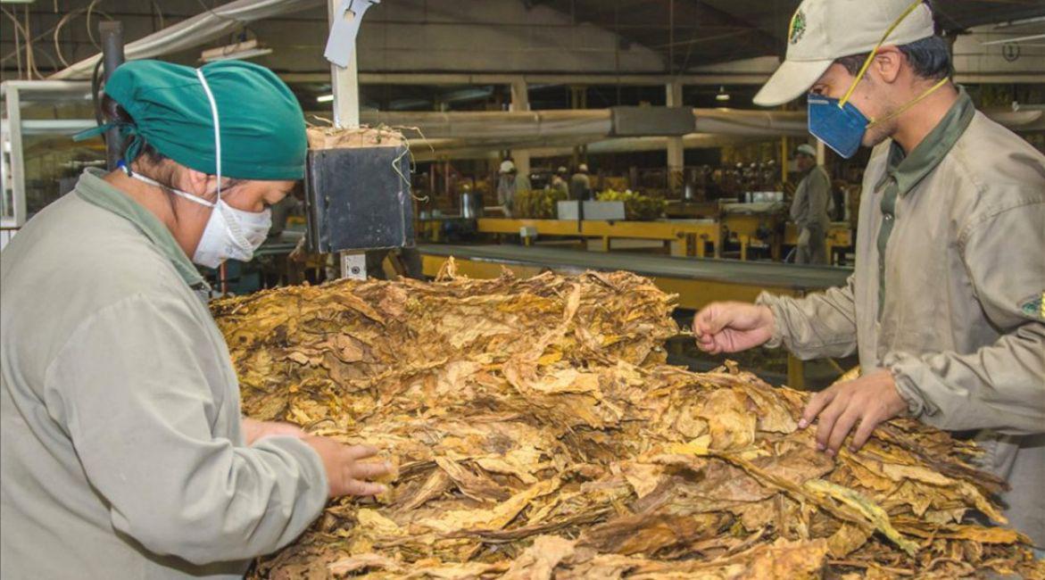 proceso industrial del tabaco