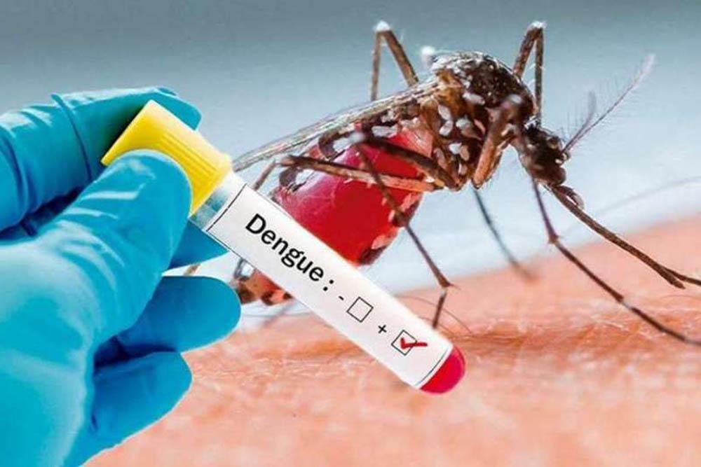 casos de dengue confirmados